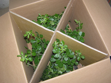 box of plants